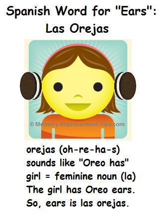 Las orejas is the word for ears in Spanish