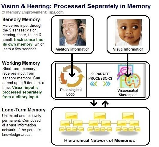 how the brain processes and stores memory Each type uses a different network in the brain, and therefore, one type can be   encoding of episodic memories is also influenced by how you process the event   information are strengthened, stabilized and stored to facilitate later retrieval.
